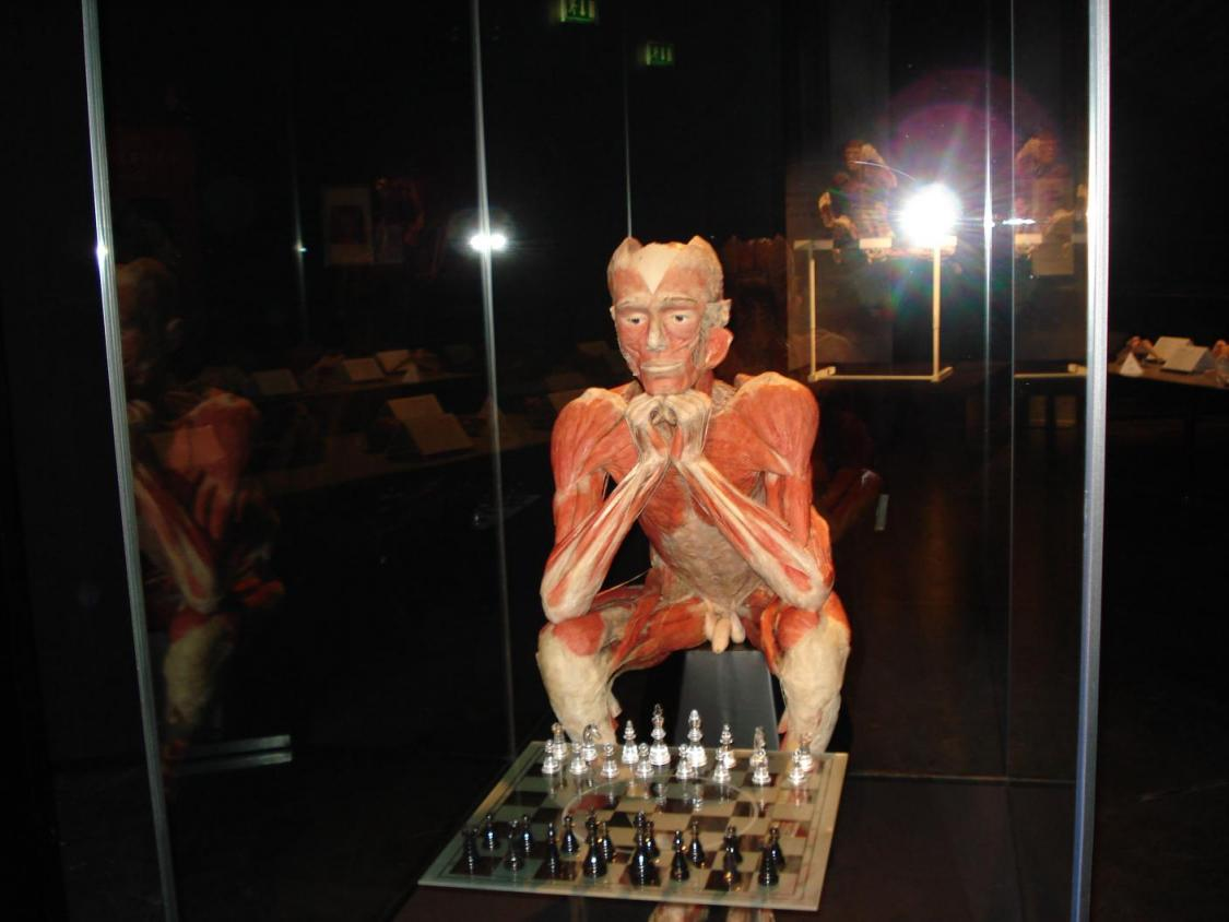 The Chess player - Copyright: Gunther von Hagens BODY WORLDS, Institute for Plastination